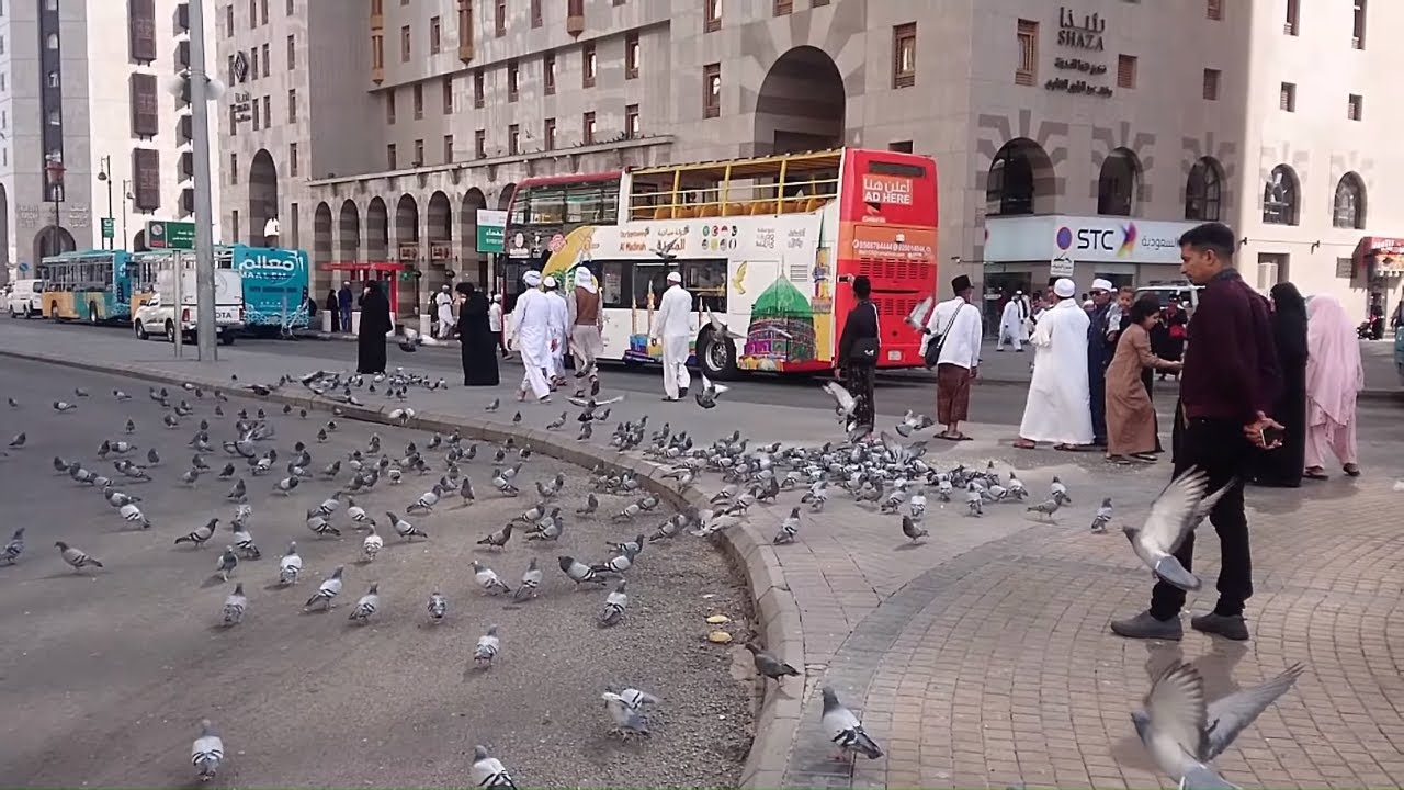 Download Saudi Arabia Travel Madina City Tour by Bus
