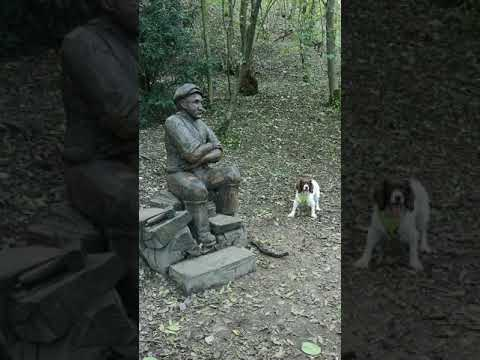 Wooden Expression: Dog Tries to Make Statue Play Fetch