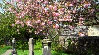 Apple Blossom Trees St Fillan
