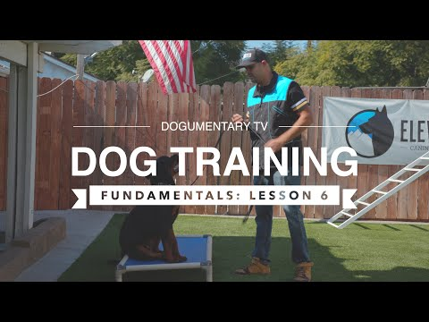 DOG TRAINING FUNDAMENTALS: LESSON 5: DURATION, DISTRACTION, & DISTANCE
