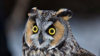 More Than Birds Field Trip - Owl Banding - Episode 1