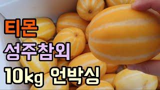 티몬 참외 10kg 한박스 언박싱 (성주참외)