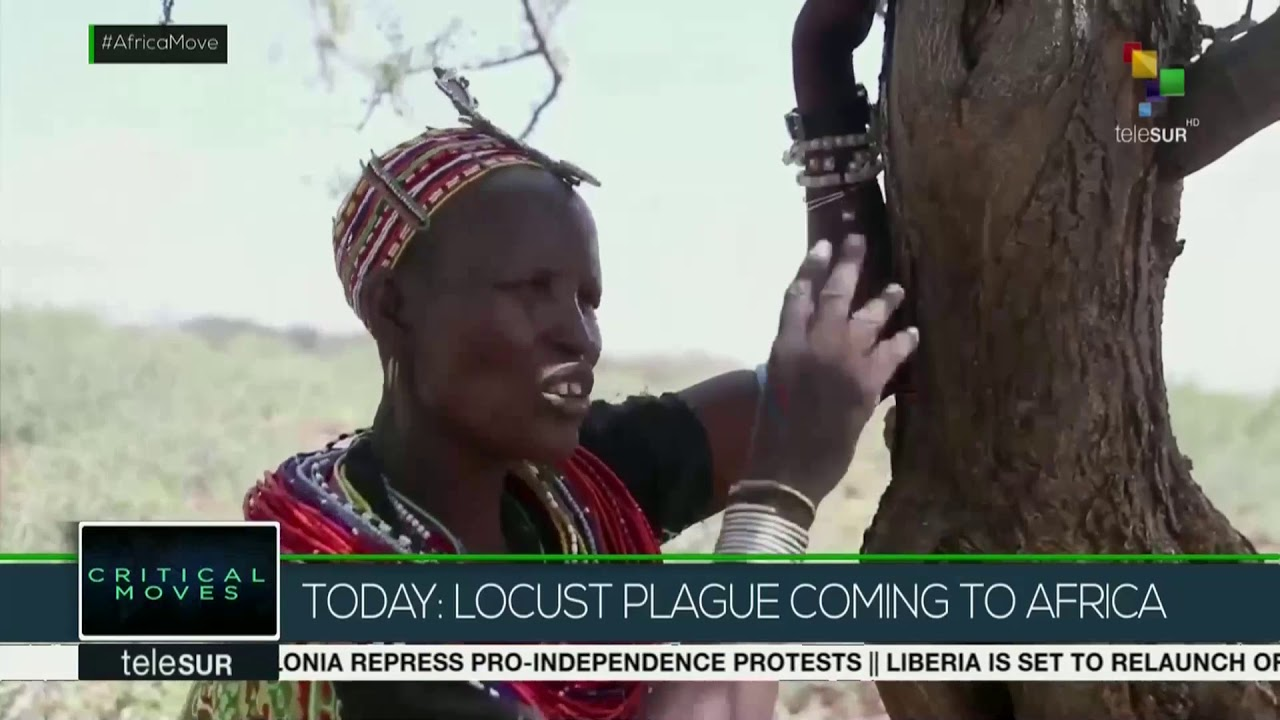 Critical Moves: Locust Plague invading Africa - YouTube