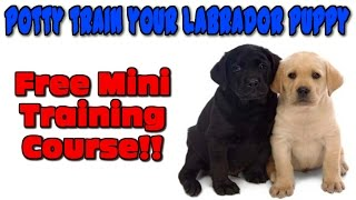 ☼ ☼ ☼ How To Potty Train Labrador Retrievers ♥ FREE COURSE ♥  Train A Labrador Puppy :)))