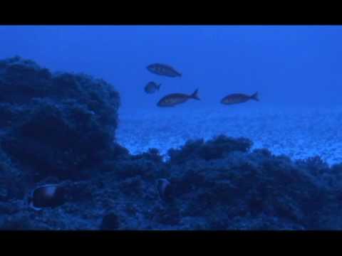 Imágenes submarinas Isla Sala y Gómez, Chile