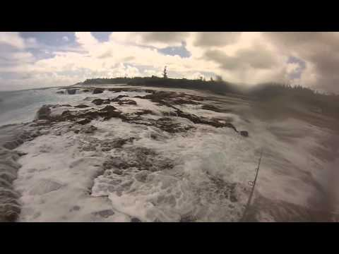 norfolk island spearfishing update 4
