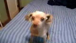 Weird Dog Bark