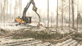 У лесозаготовителей области начался самый напряженный период
