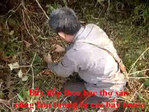 clip săn gà rừng ở sơn la