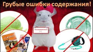 Грубые ошибки содержания ШИНШИЛЛ!#1