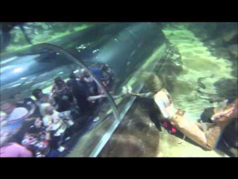 Deep Sea World's Mermaid - YouTube