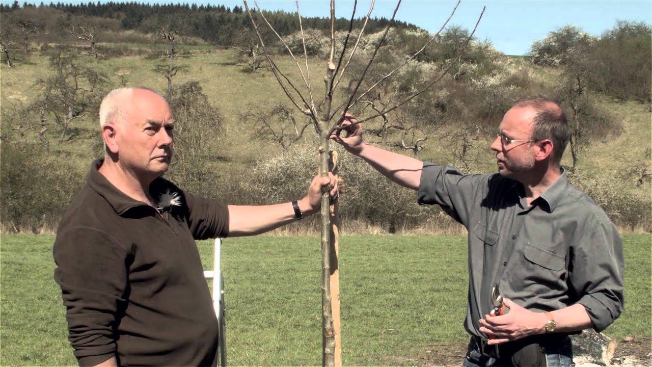 Obstbaum Richtig Schneiden Obstbaumschnitt Der Pflanzschnitt