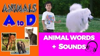 Animal words & sounds starting with ABCD 🎧 Animal Sounds and Words Beginning With Letters ABCD