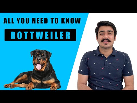 Rottweiler Dog | Rottweiler dog price in India|Rottweiler dog training| Rottweiler is a family dog?