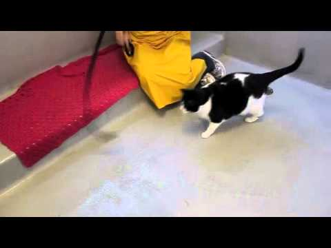 ADOPTED! WHSPromo-Holstein