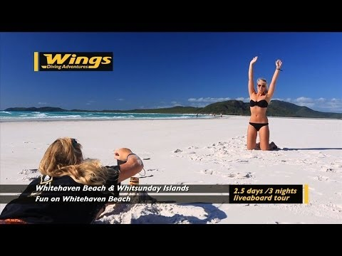 Experience the Whitsundays with Wings Diving Adventures onboard Wings II