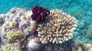 Best Snorkeling In The Philippines   Port Barton