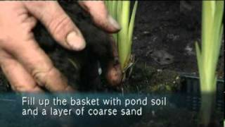 How To Plant Bog Plants