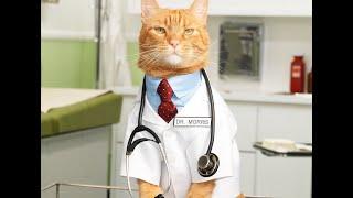 Как снизить артериальное давление с помощью кота?
