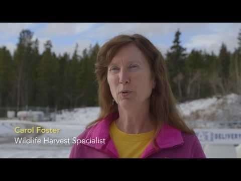 Yukon Biologists – Fish And Wildlife Branch