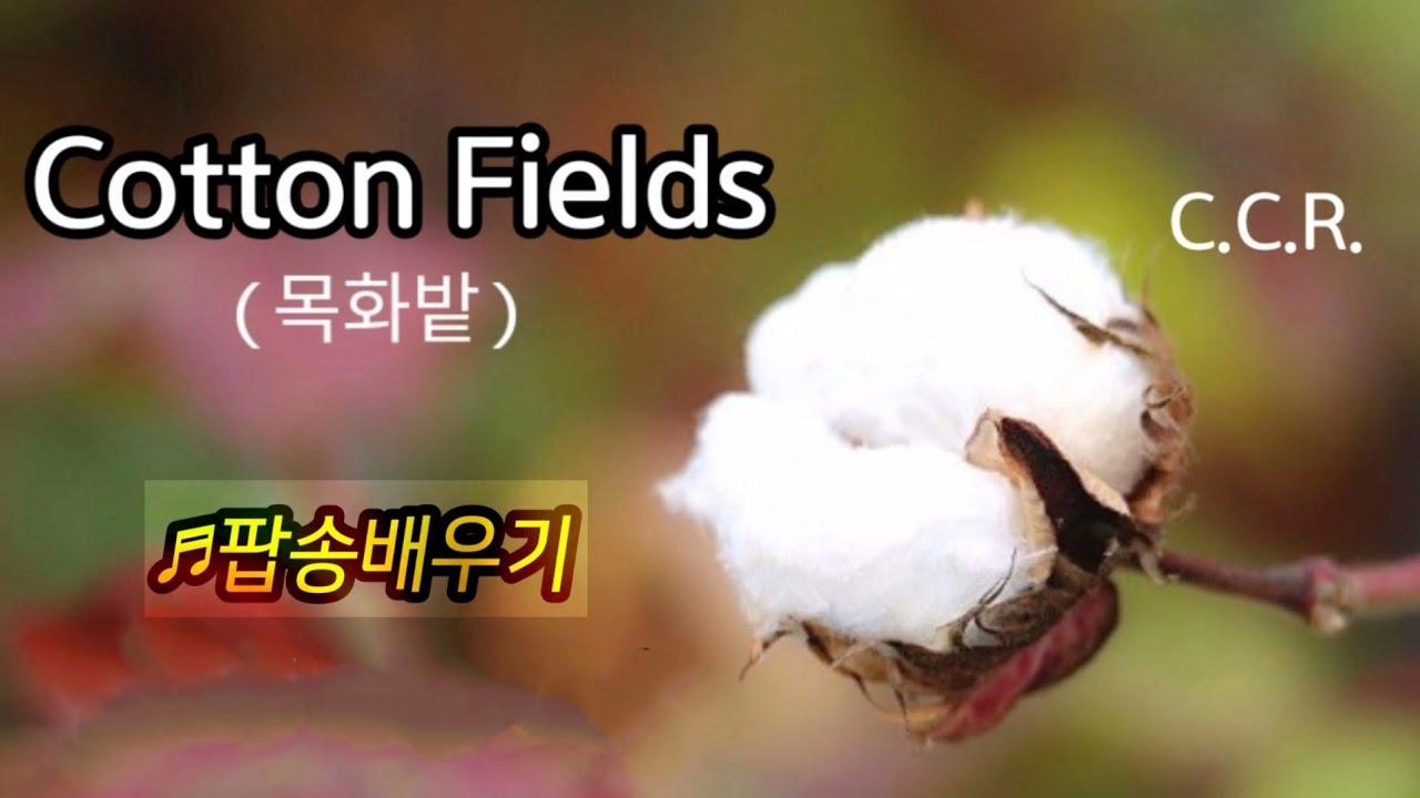 #팝송배우기 ♪Cotton Fields(목화밭) - C.C.R./악보(2:53)