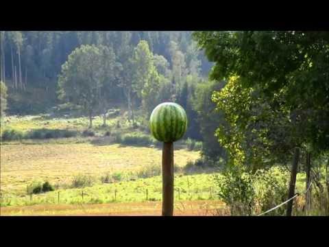 30-06 Speer TNT HP 125 Gr vs Watermelon - YouTube