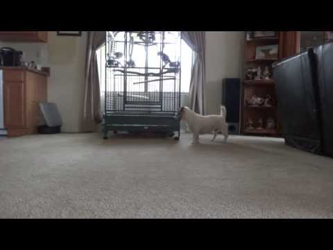 Jesse plays Chase with Lucky