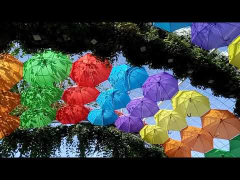 World bigest Best Garden Dubai Miracle Garden 2020 part 2