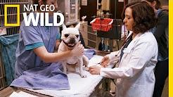 hqdefault - American Bulldog Back Pain