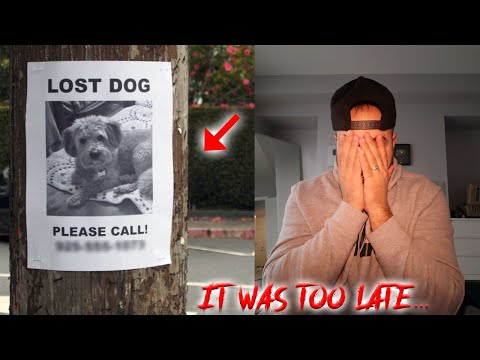 WE MAY HAVE FOUND a MISSING DOG (IT WAS TOO LATE)