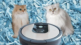 CATS REACT TO ROBOT VACUUM - Smoothie Is Shook