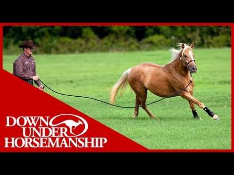 Clinton Anderson: Training a Rescue Horse, Part 6 - Downunder Horsemanship