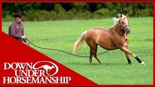 Clinton Anderson: Training a Rescue Horse, Part 6  Downunder Horsemanship