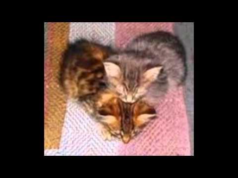 Hervorragend chat mignon est swag - YouTube LE48