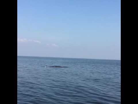 Whale watching in the Gulf of Thailand