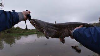 Рыбалка на Кубани. Ловля сома и судака на спинниг. Ловля судака на джиг. Ч1