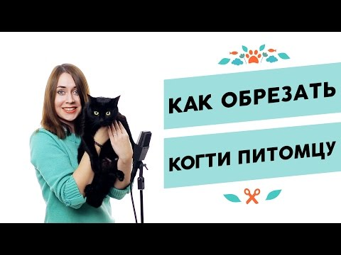 Почему у кошек врастает коготь и как помочь своему питомцу