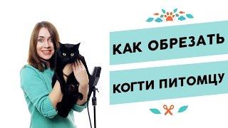 Как правильно обрезать когти кошке | Советы владельцам от pethouse.ua