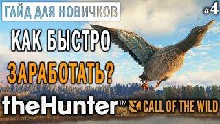 theHunter Call of the Wild #4 🔫 - Как Быстро Заработать и Прокачаться? - ГАЙД
