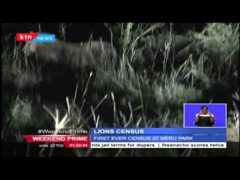 First ever Lion Census kicks off in Meru National Park