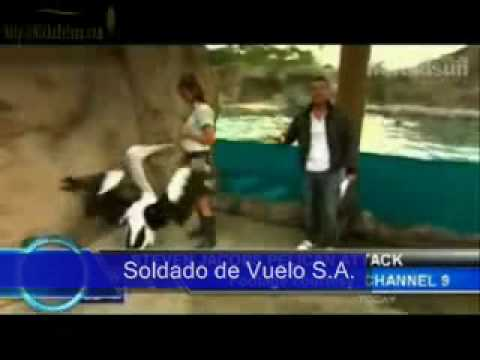 Weather Man, Attacked By a 'Pelican' Channel 9 Steve Jacobs,Australia Tv ''Let Me Go''