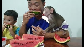 Baby Monkey | Doo And Tom Love Watermelon
