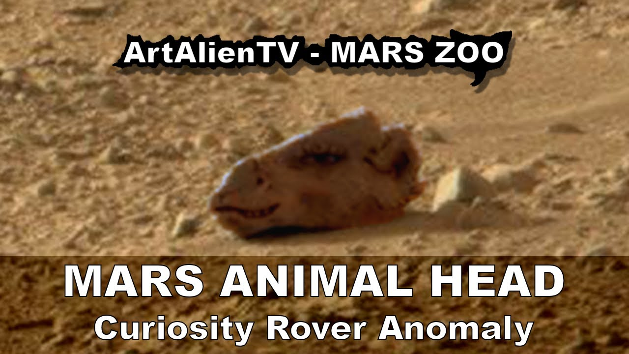 mars rover finds animal - photo #37