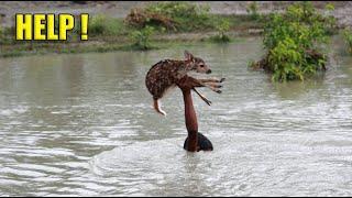 Marcos únicos de rescate de animales. La gente ayuda a los animales atrapados en problemas #2