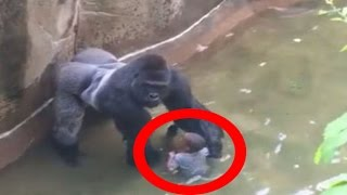 People Who Fell Into Animal Enclosures At The Zoo