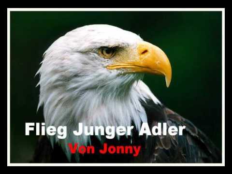 Flieg Junger Adler