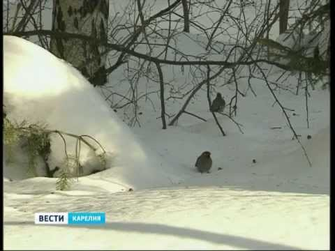 Прогноз погоды в Карелии