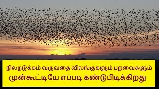 How bird and animal find earthquake before it occur in Tamil | Tamilcure