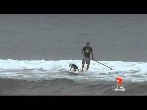 Chris de Aboitiz The Dog Man on Channel 7 LOCAL NEWS - 8TH MAR 2012.mp4