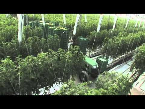 Video Agricola el rosal